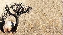 L'arbre dans le rocher